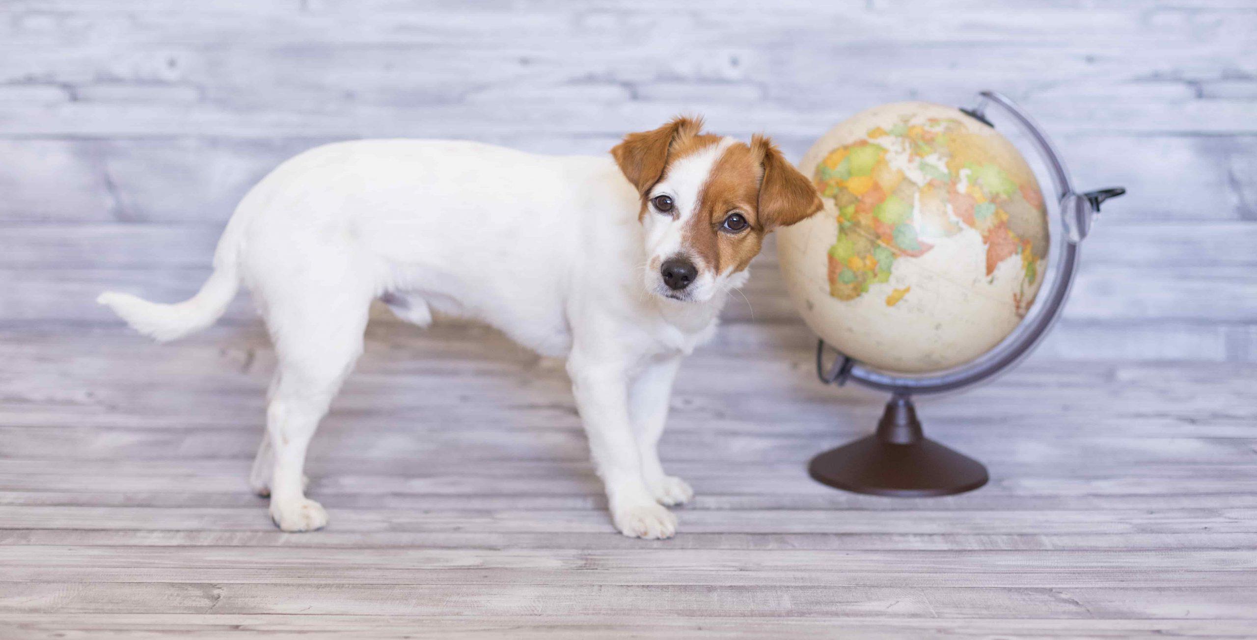 destinations-pet-friendly