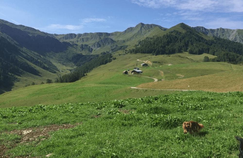 Savoie avec deux chiens